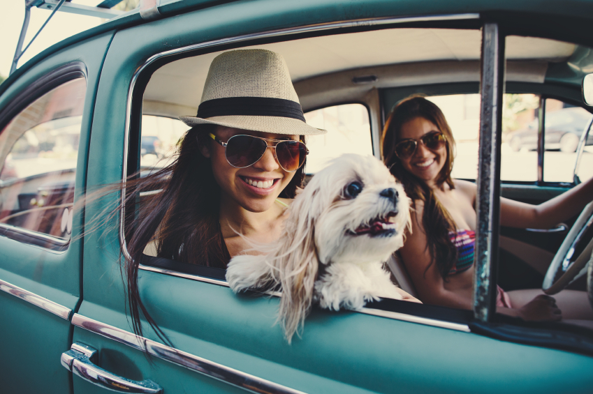 Road trip or jet set pet friendly travel tips my for Air travel with dog in cabin